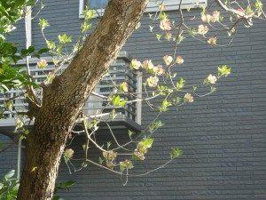 4月の花2