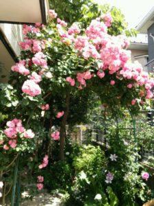バラの季節1